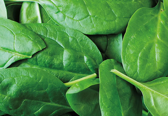 10174-6_Spring_Wellness_Spinach_550x382.jpg