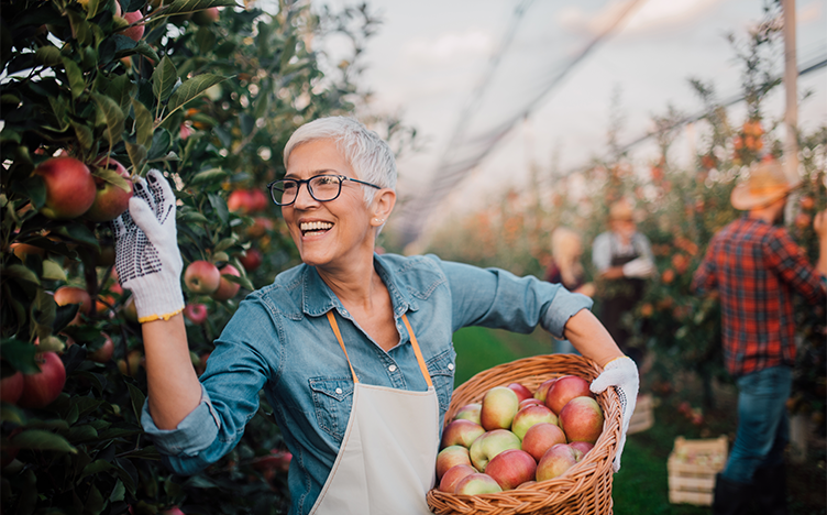 Woman smiling picking apples in an orchard.