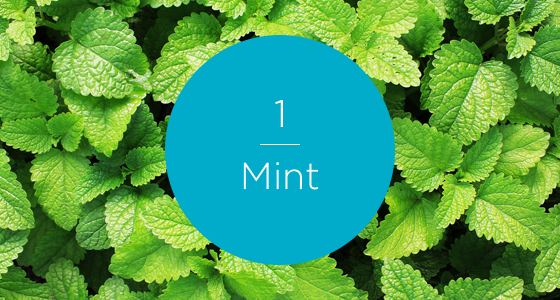 12267-7 Herbs-Mint-560x300_numbered.png