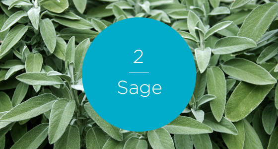 12267-7 Herbs-Sage-560x300_numbered.png